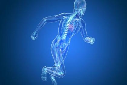 Orthopaedic-RANGE-